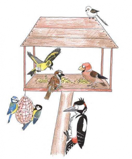 Dokarmiamy ptaszki